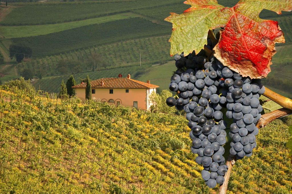 Tuscany and Wine An eternal love story_M